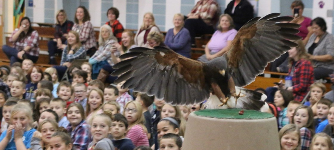 The Columbus Zoo brought many animals, including this hawk, to Ben Franklin Elementary